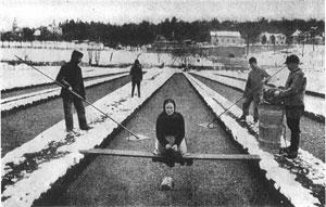 Ernte der Brunnenkresse auf Winterklinge